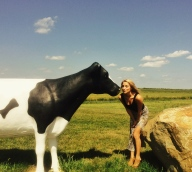 Kissin' Cows in Wisconsin